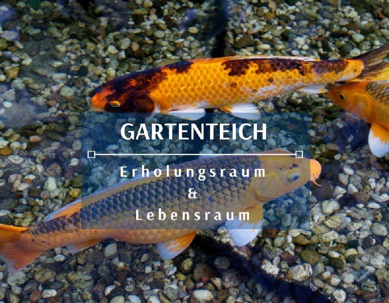 Garteinteiche koi und goldfische kaufen nahe graz for Koi und goldfische