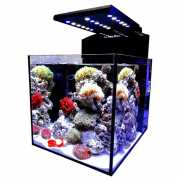 Aquamedic Blenny advanced